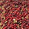 Planalto Estate Coffee